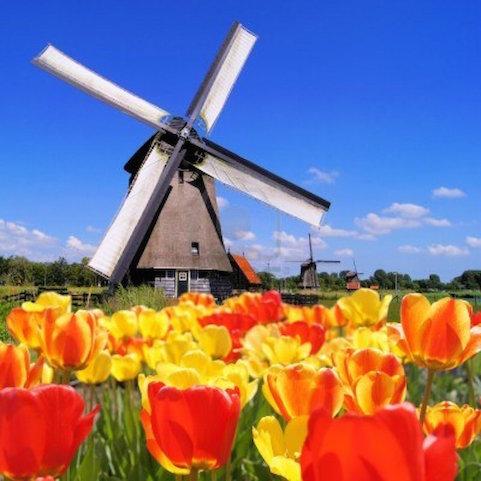 molino de viento holanda 481 x 481